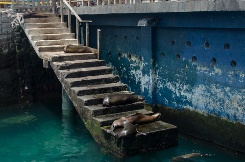 Sea Lion Stairs